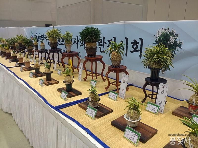 KakaoTalk_20181101_165721761.jpg : 제5회 한국춘란산업박람회 풍란전시 참여
